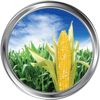 Zinc, manganese and potassium are used as a micro-nutrient to grow corn for bio-fuel